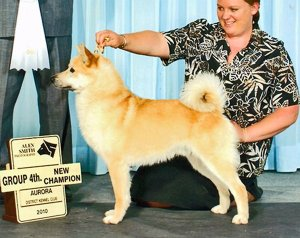 Kyon Kennel's Tomba - Cherokee's Sire