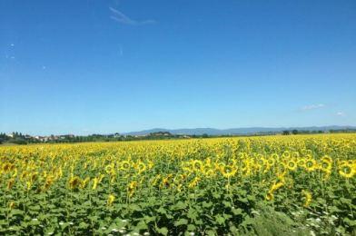 Sinalunga, viajando a la Toscana…