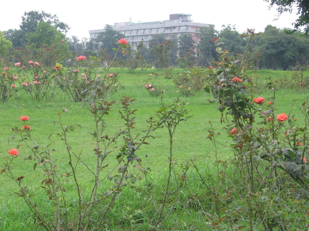 El jardin de las rosas de Chandigarh