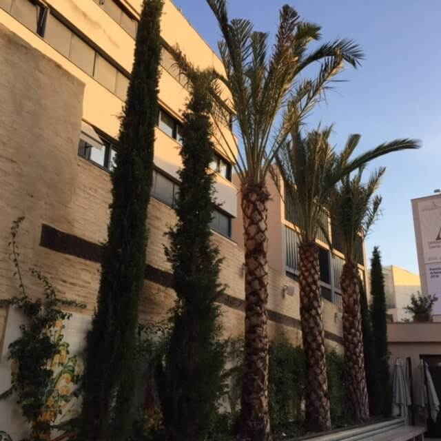Terraza interior colegio del arte mayor de la seda.