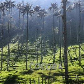 valle del Cocora, Quindío