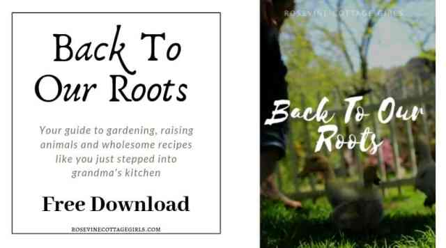 Back to our roots, by rosevine cottage girls