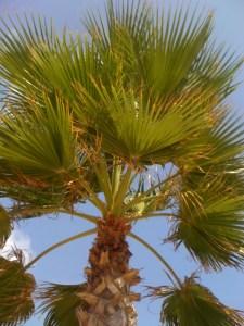 Holiday palm
