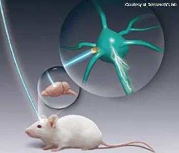 optogenetics mouse