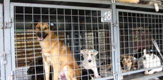 жестокое обращение с животными, собаки, клетка