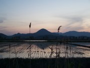 Cycle around Suncheonman Bay Ecological Park