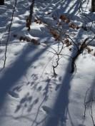 Snow on Taebaeksan