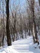 Path to the summit of Taebaeksan