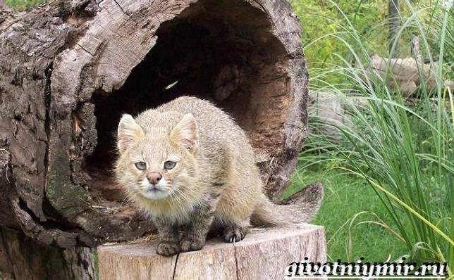 Eläimet Southern-America-Kuvaus-ja -ominaisuudet - Animal-Etelä-Amerikka-18