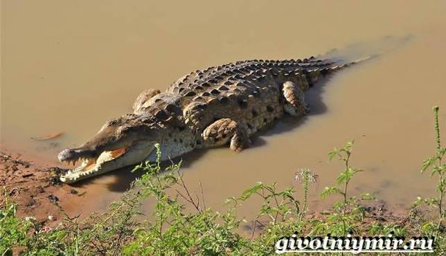 Eläimet Southern-America-Kuvaus-ja -ominaisuudet - Animal-Etelä-Amerikka-20