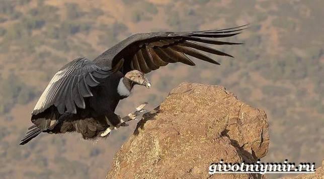 Eläimet Southern-America - Kuvaus-ja-Ominaisuudet - Animal-Etelä-Amerikka-24