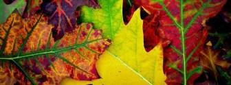 Jesień to najbardziej kolorowa pora roku