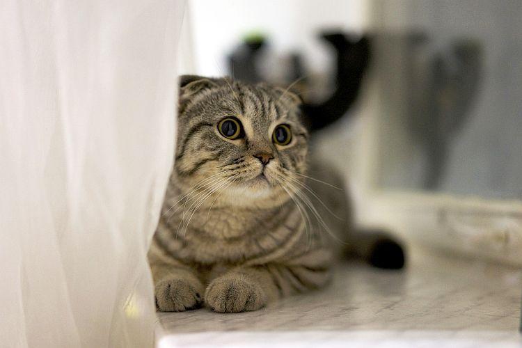 Kot - i święty, i przeklęty…