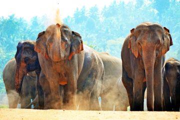 Sri Lanka: herbata, słonie i… smog