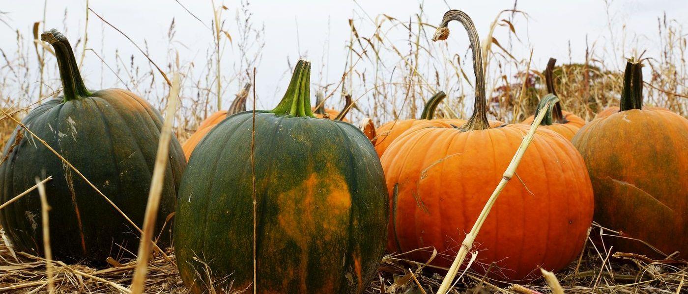 Dynia - kulinarna królowa jesieni! Przepisy i właściwości dyni