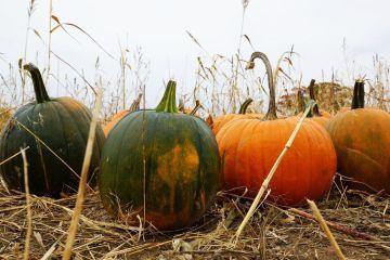 Dynia - kulinarna królowa jesieni. Potrawy z dyni i jej właściwości zdrowotne