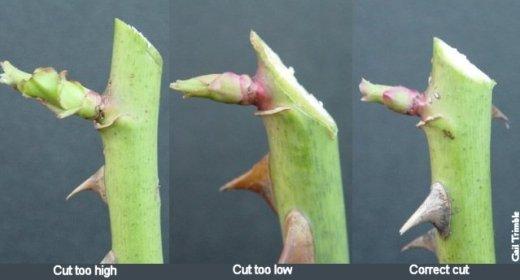pruningcuts-1