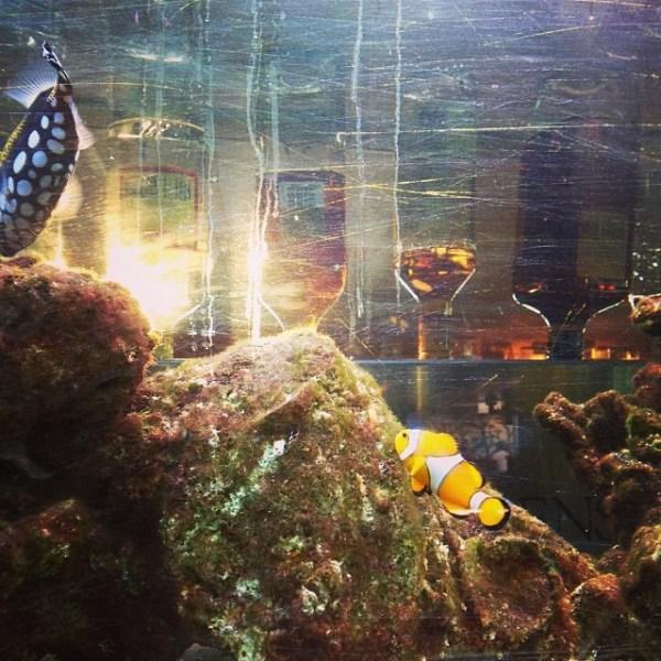 Scratchy aquaria