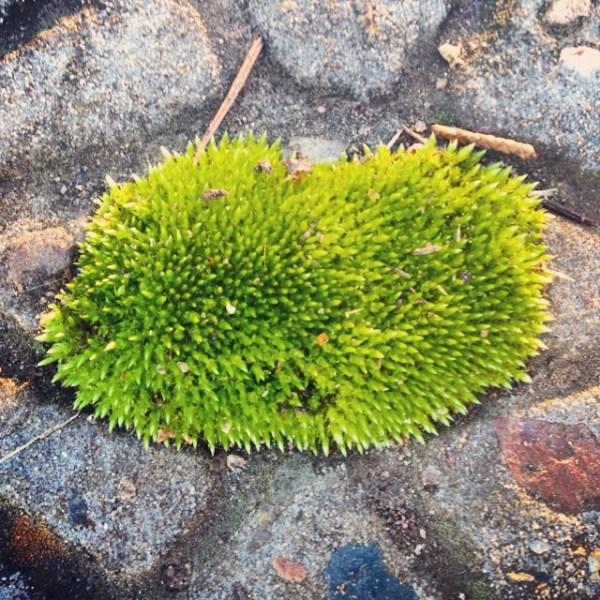 Moss...