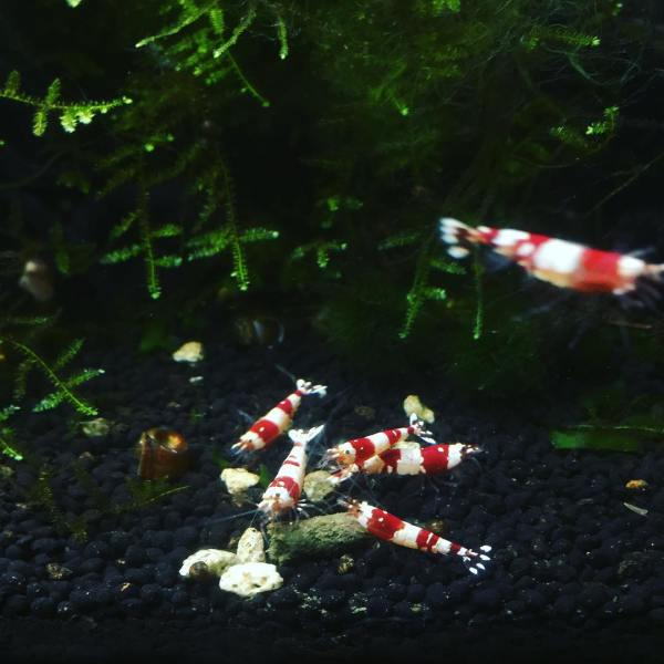 Hungry, hungry shrimpies...