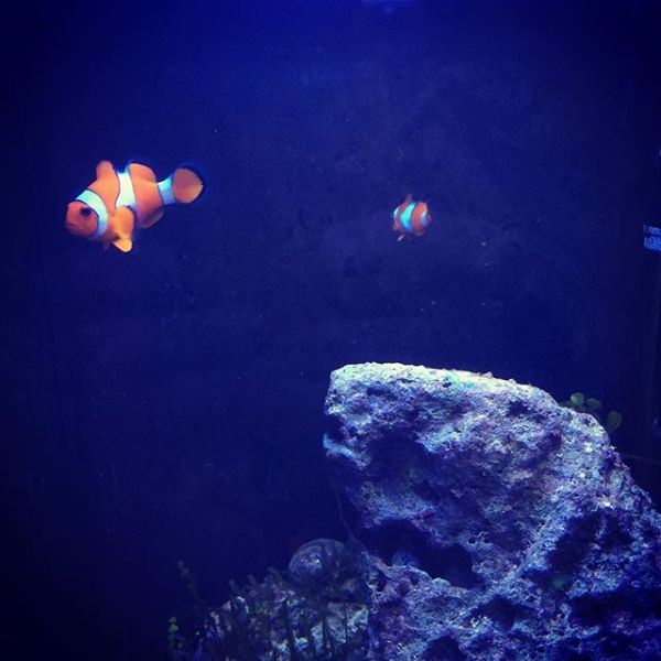 Found Nemos...
