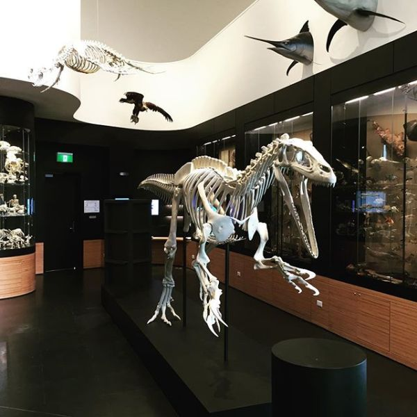 New exhibits incoming @ UNE Natural History Museum