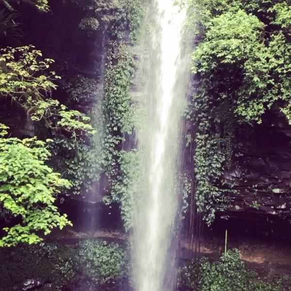 Crystal Shower Falls, Dorrigo National Park @nswnationalparks