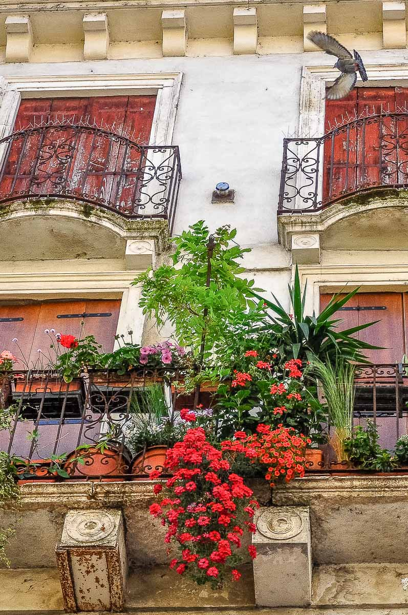 A small balcony garden with green plants and red flowers and a flying dove above - Vicenza, Italy - rossiwrites.com