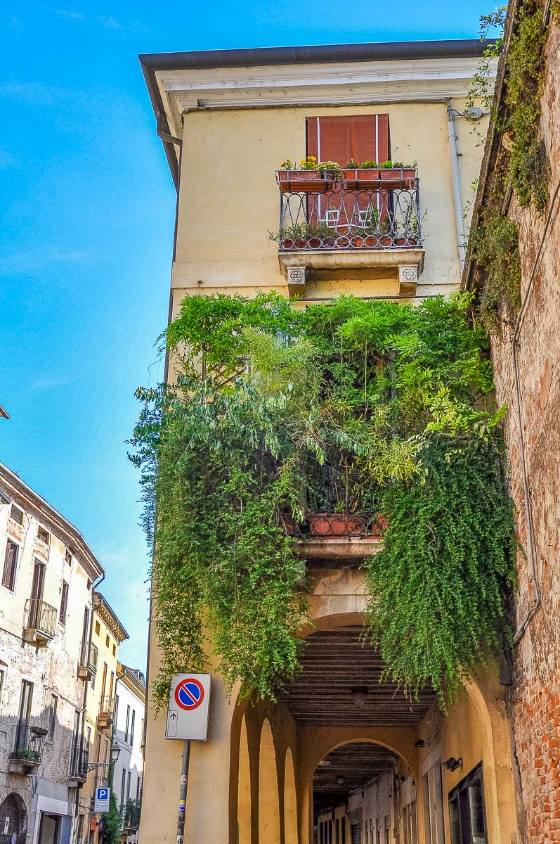 A sumptuous green garden in a small balcony - Vicenza, Italy - rossiwrites.com