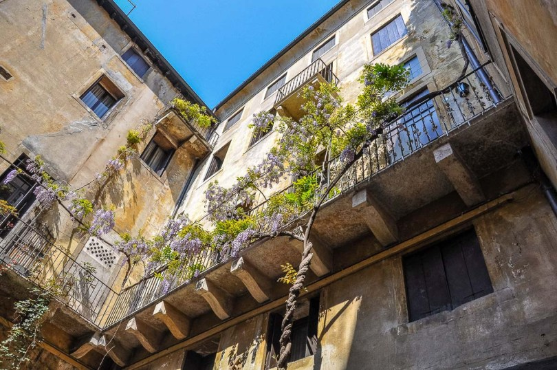 An Italian balcony enveloped by a flowering wisteria - Vicenza, Italy - rossiwrites.com