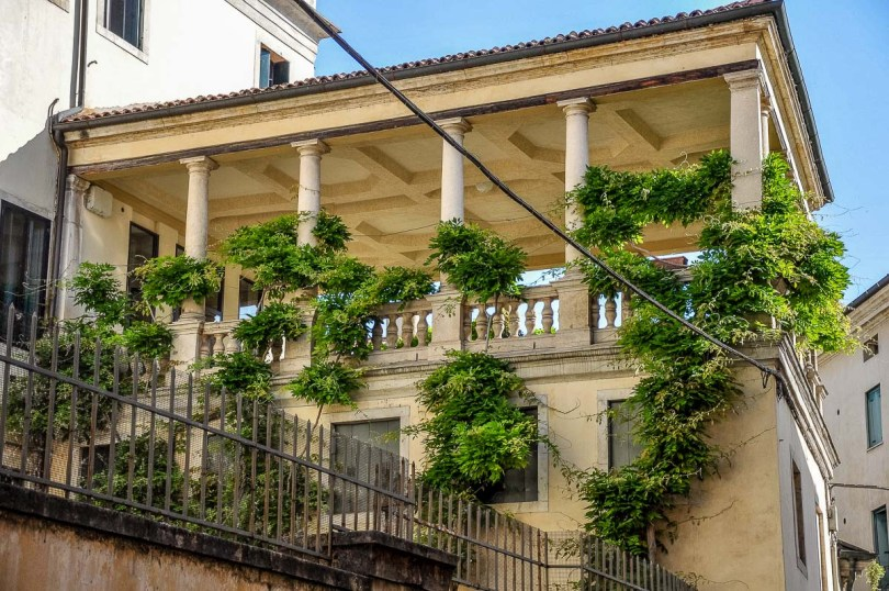 Terrace garden with a lush wisteria plant - Vicenza, Italy - rossiwrites.com