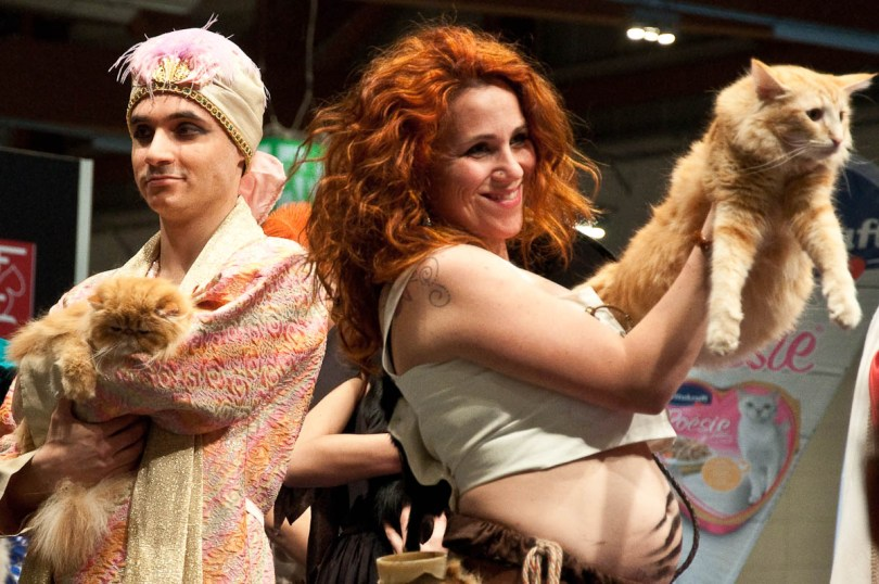 A Norwegian and a Persian cats during the catwalk, Golden Cat Show, Vicenza, Italy www.rossiwrites.com