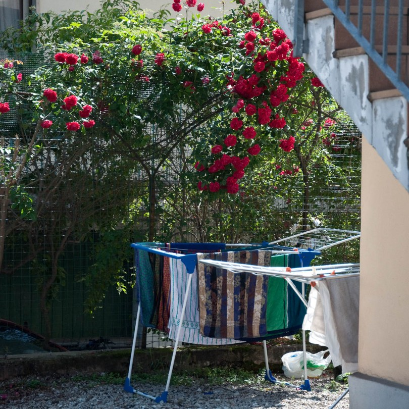 A rose bush and fresh laundry, Vicenza, Italy