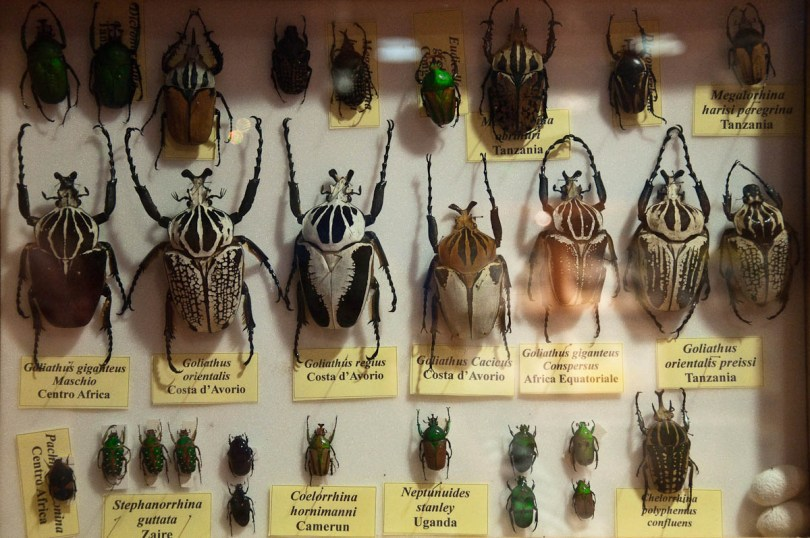 Beetles display, Esapolis, Padua, Veneto, Italy - www.rossiwrites.com