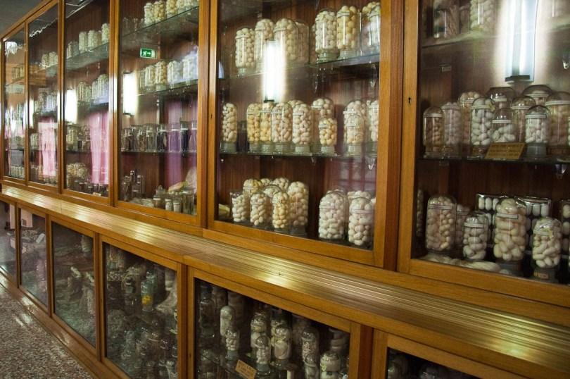 Silk cocoons - display cabinet, Esapolis, Padua, Veneto, Italy - www.rossiwrites.com