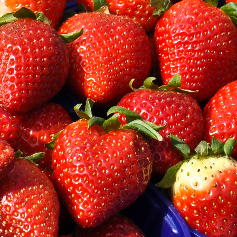 Strawberries at the market in Padua