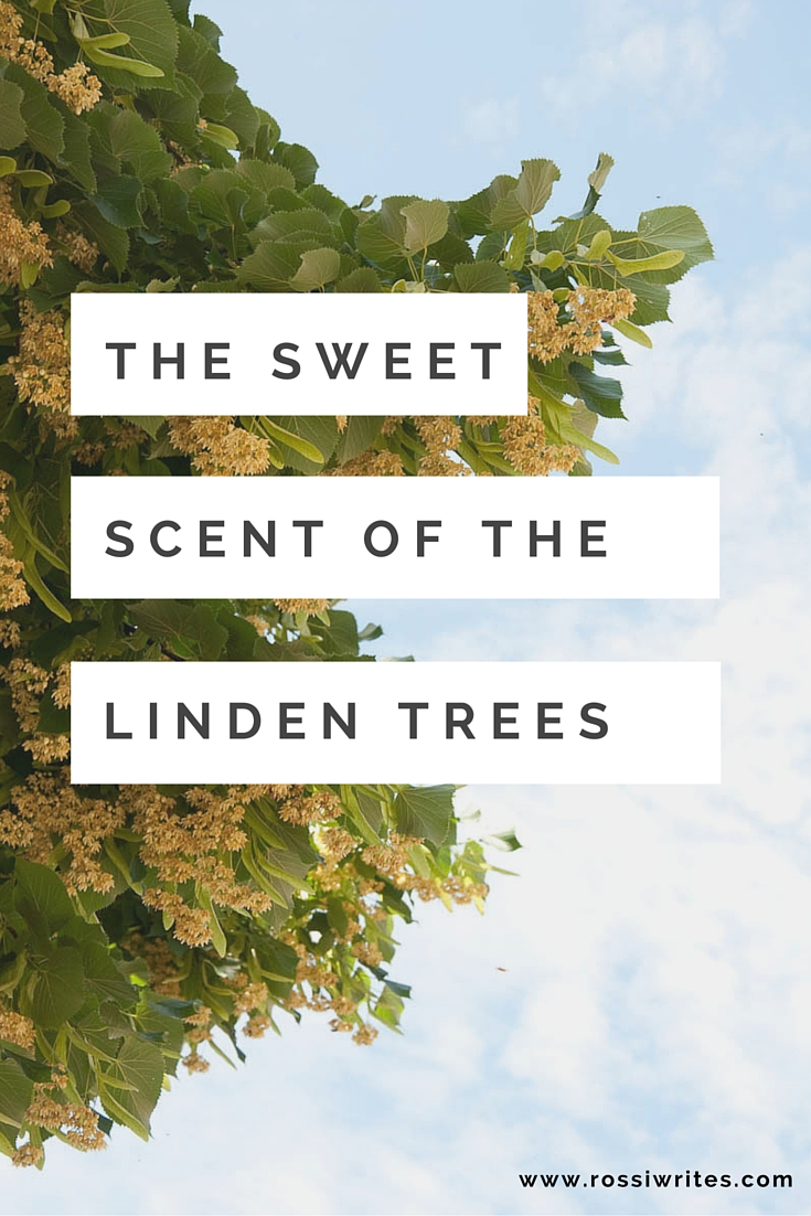 Pin me - The Sweet Scent of the Linden Trees - www.rossiwrites.com