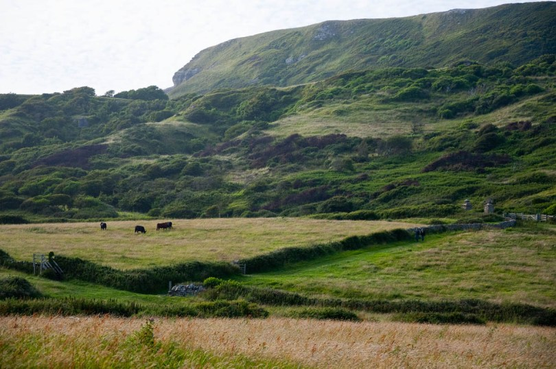 Green fields and hills with cows in the distance, Isle of Wight, UK - www.rossiwrites.com