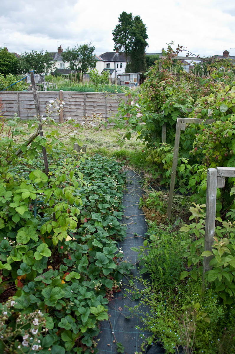 A black path separating two allotments, England - www.rossiwrites.com