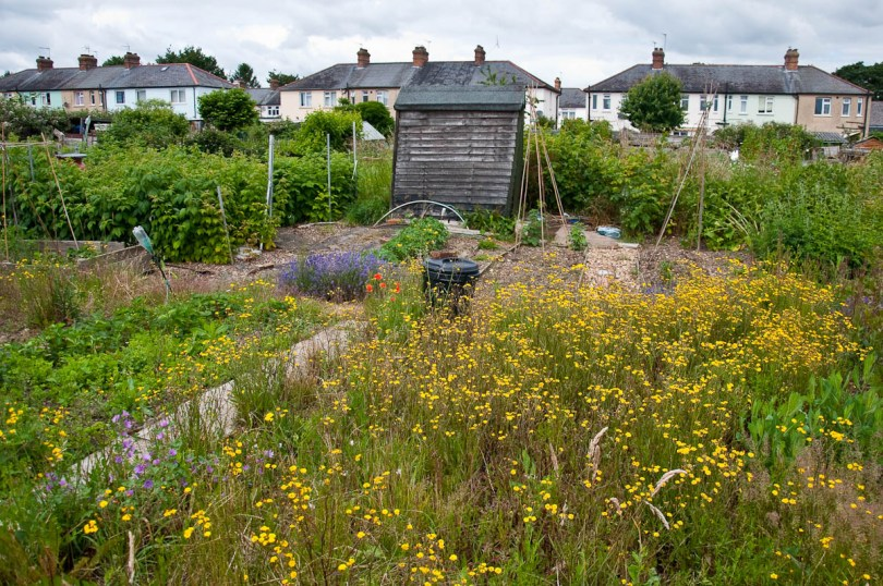 Overgrown allotments with houses at the back, England - www.rossiwrites.com