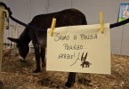 a-donkey-on-its-lunch-break-vicenza-italy-www.rossiwrites.com