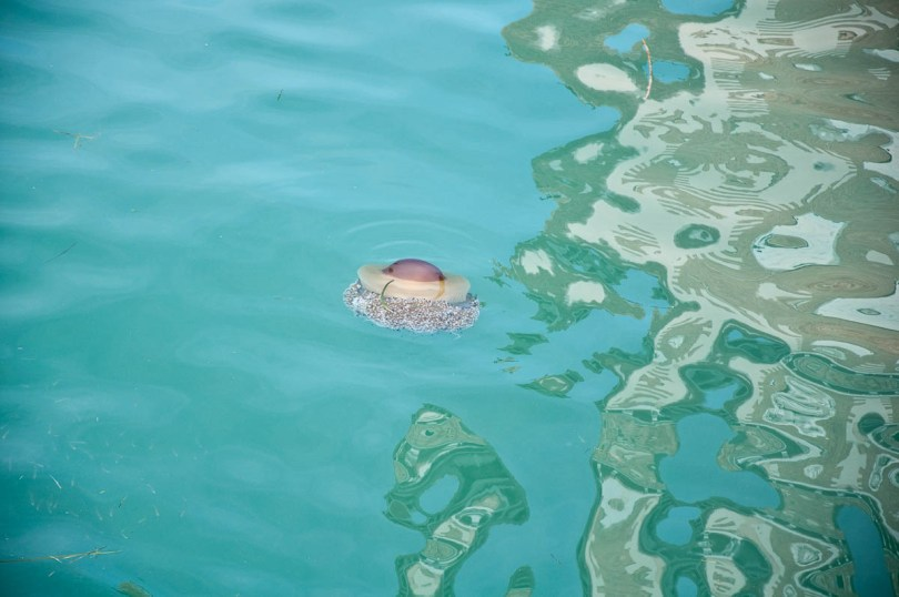 Jellyfish spotted in a Venetian canal - Venice, Italy - rossiwrites.com