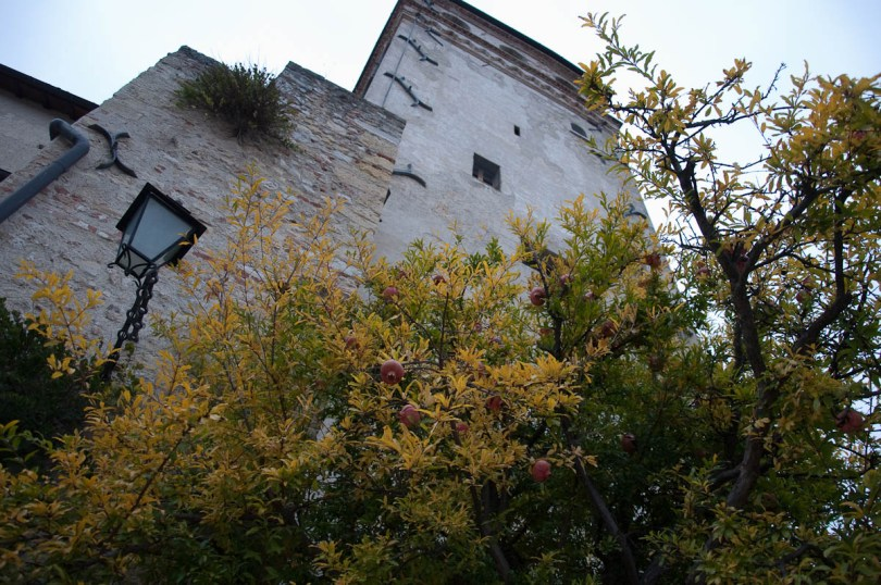 A pomegranate tree in the courtyard of the medieval castle - Asolo, Veneto, Italy - www.rossiwrites.com