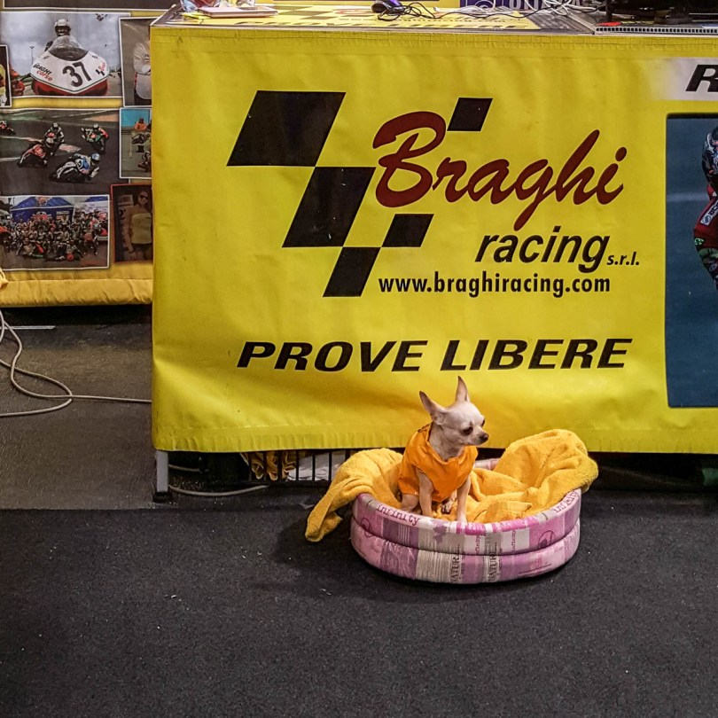 A tiny dog at the Braghi stand - Verona Motor Bike Expo 2017, Italy - www.rossiwrites.com