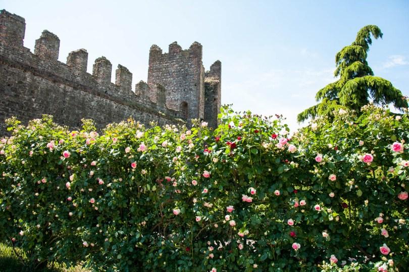 The rose garden - Carrarese Castle, Este, Veneto, Italy - www.rossiwrites.com