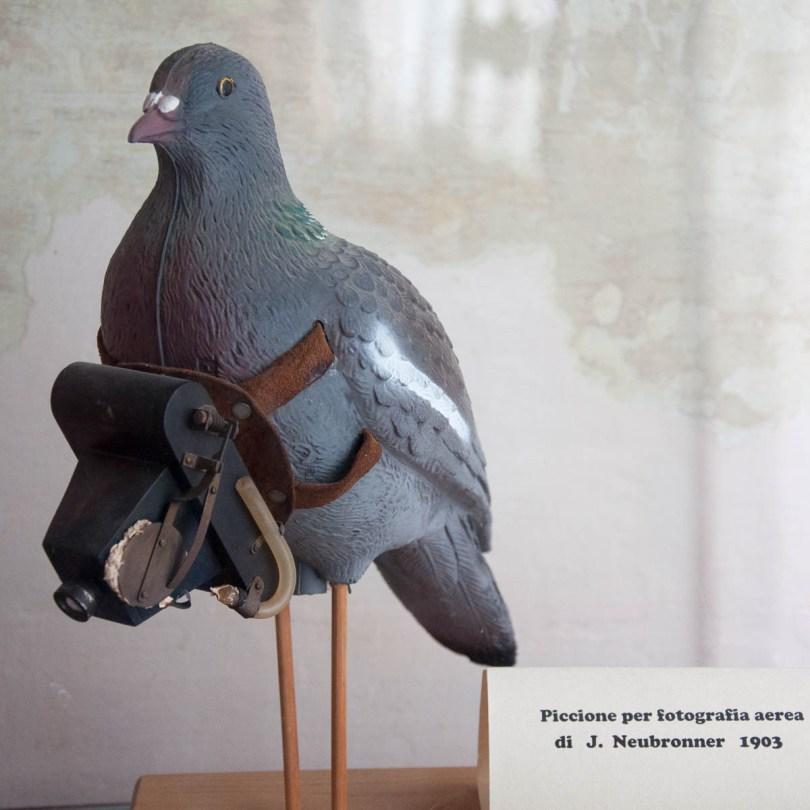 Pigeon photographer, Museum of Flight - Castello di San Pelagio, Province of Padua, Veneto, Italy - www.rossiwrites.com