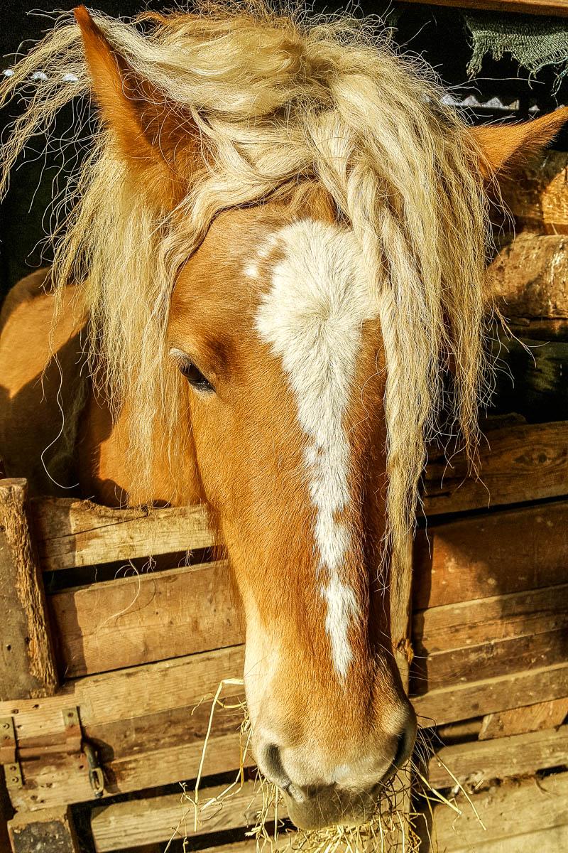 Ursula the Horse - Fattoria Il Rosmarino, Marcon, Veneto, Italy - www.rossiwrites.com
