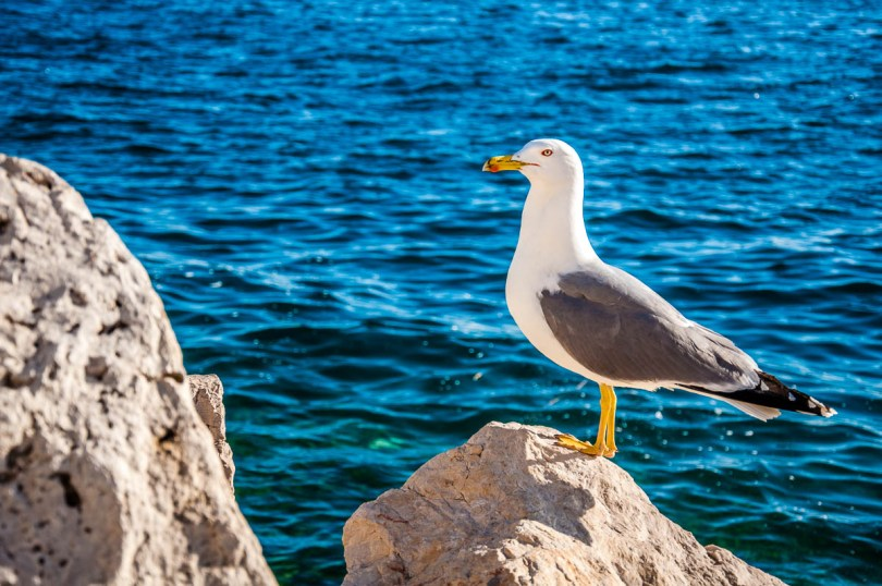 A seagull on the seafront - Piran, Slovenia - www.rossiwrites.com