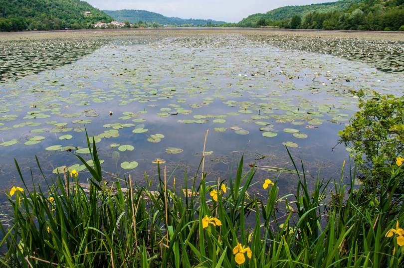 Lakeview with yellow flowers - Lake Fimon, Arcugnano, Vicenza, Veneto, Italy - www.rossiwrites.com