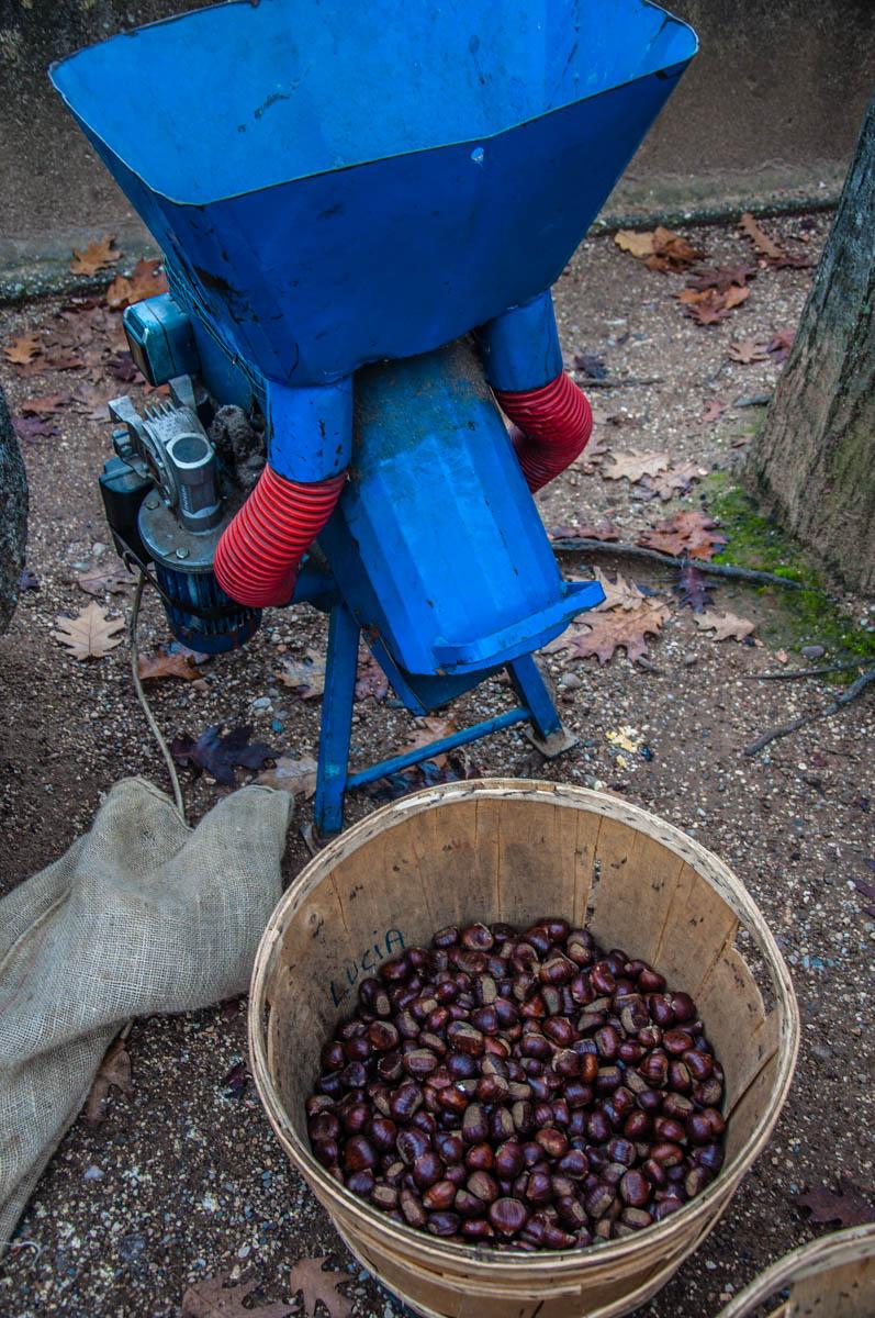 Electric chestnut cutting machine - Borghetto sul Mincio, Veneto, Italy - www.rossiwrites.com